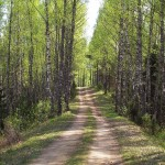 1024px-Forest_trail_in_Põhja-Kõrvemaa,_May_2010
